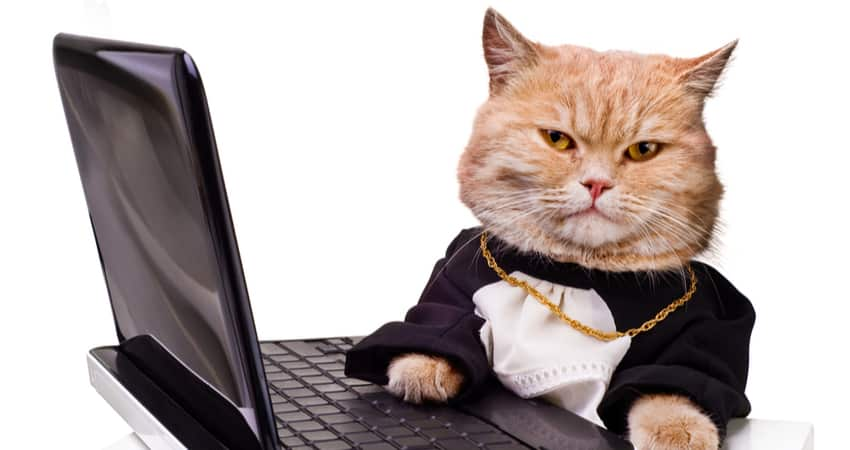 Why have digital cats suddenly become so popular?