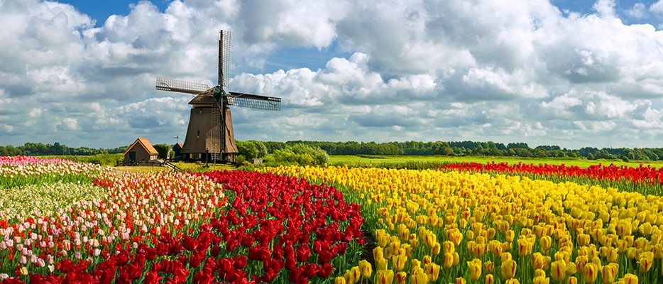 Netherlands' economic strengths and possible issues